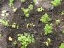 20170421 Herb Garden